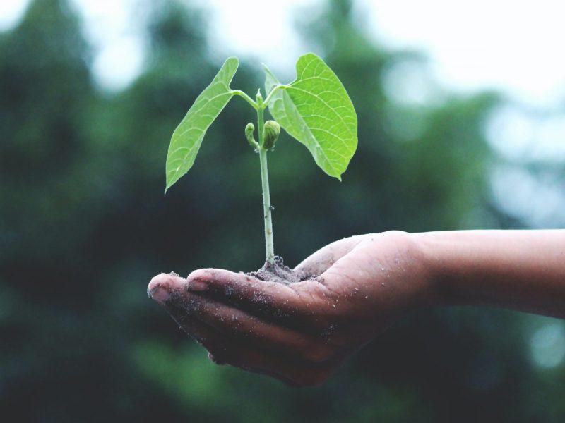 Sustainability Week blog2